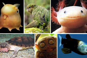 Απίθανα ζώα που δεν ξέρουμε καν