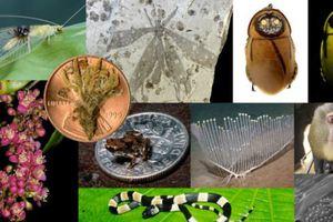 Τα πιο περίεργα είδη που ανακαλύφθηκαν το 2012