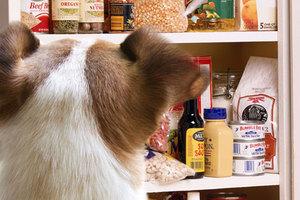 Οι απαγορευμένες τροφές για τους σκύλους