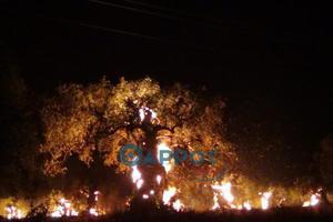 Μεγάλη φωτιά μαίνεται στην Κυπαρισσία