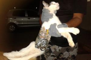 Συνελήφθη γάτος για… λαθρεμπόριο κινητών