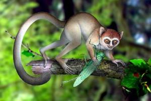 Μικροσκοπικοί πίθηκοι οι πρόγονοι του ανθρώπου σύμφωνα με έρευνα