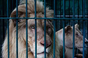 Ζωή μέσα σε κλουβιά