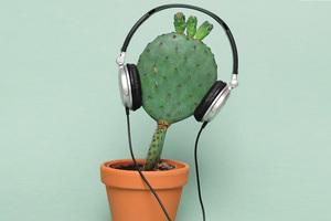 Ο μυστικός κόσμος της επικοινωνίας των φυτών