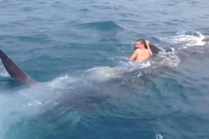 Βούτηξε στο νερό και καβάλησε ένα φαλαινοκαρχαρία!
