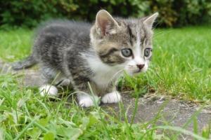 Αύξηση στο λαθρεμπόριο γούνας γάτας στην Ελβετία