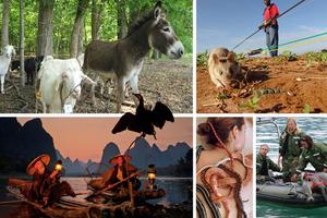 Τα ζώα στη νέα υπηρεσία του ανθρώπου