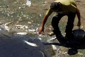 Γέμισε νεκρά ψάρια ο Πηνειός
