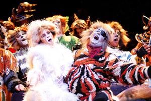 Το θεατρικό μιούζικαλ CATS έρχεται στην Ελλάδα το 2014