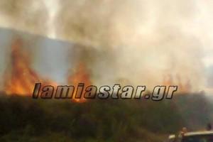 Μεγάλη πυρκαγιά στον Ορχομενό