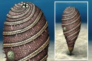 Απολιθωμένο πλάσμα σε σχήμα τσιγάρου ανακαλύφθηκε στο Μαρόκο