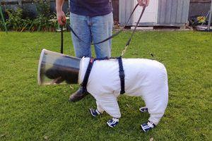 Ο σκύλος... μελισσοκόμος