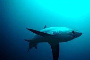 Σώθηκε από επίθεση καρχαρία για δεύτερη φορά!