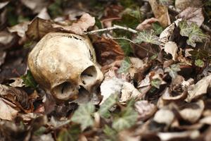 Θάνατοι στη φύση
