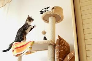 Η περιέργεια... τρόμαξε τις γάτες
