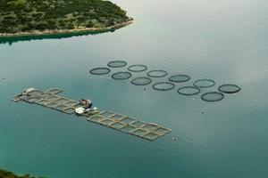 Καθιερώνεται εθνικό πρόγραμμα Ανάπτυξης Υδατοκαλλιεργειών