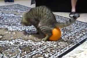 Το γατί και το μπαλόνι...