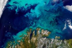 Η κλιματική αλλαγή «σπρώχνει» τα θαλάσσια είδη στους πόλους