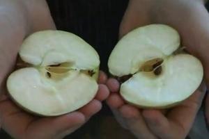 Πώς να κόψεις ένα μήλο με τα χέρια