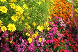 Πώς να προστατέψετε τα λουλούδια από τα έντομα