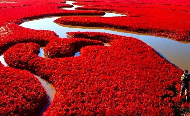 Δείτε αυτό το μοναδικό φαινόμενο!Την παραλία που γίνεται κατακόκκινη κάθε φθινόπωρο(photos)!
