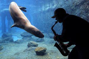 Ερευνητική «συναυλία» στο ζωολογικό κήπο της Αυστραλίας