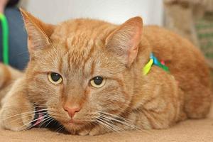 Γάτα σώθηκε με μετάγγιση αίματος από... σκύλο!