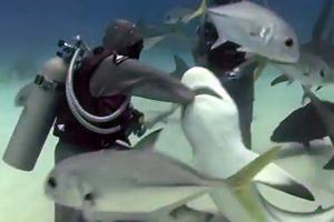 Έβαλε το χέρι της στο στόμα του καρχαρία για να βγάλει το αγκίστρι