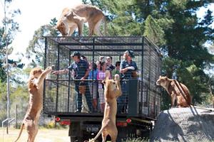 Πάρκο άγριας ζωής βάζει τους… τουρίστες σε κλουβί
