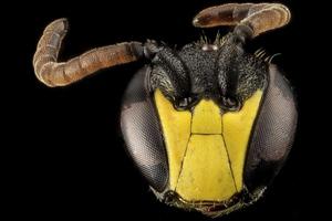 Ο εντυπωσιακός και παράξενος κόσμος της μέλισσας