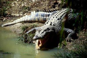 Κροκόδειλος έφαγε 11χρονο στην Παπούα Νέα Γουινέα
