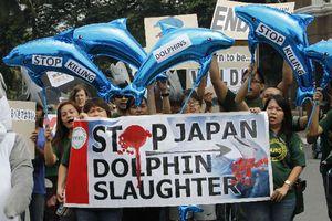 «Σταματήστε τη σφαγή των δελφινιών»