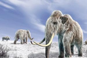 Η κλιματική αλλαγή οδήγησε τα μαμούθ στην εξαφάνιση