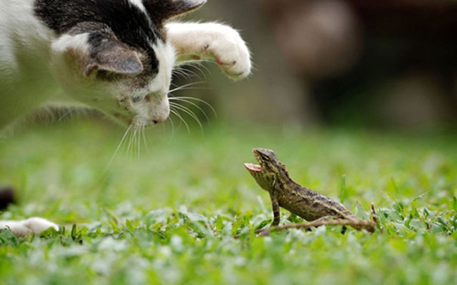 ΔΕΙΤΕ: Ο ξεχωριστός κόσμος των ζώων!