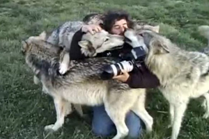 Οι λύκοι που έγιναν… αρνάκια