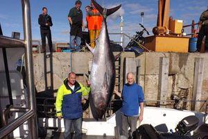 Ψαράδες εναντίον τεράστιου τόνου: Σημειώσατε... «1»