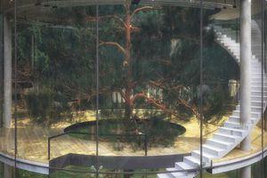 Υπερμοντέρνα κατοικία με ένα δέντρο στο… επίκεντρο