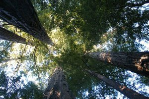 Λιγότερα περιστατικά άσθματος στις γειτονιές που έχουν πολλά δέντρα