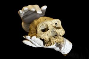 Αρχαίο κρανίο θέτει νέα δεδομένα για τους προγόνους μας