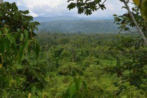Η ξηρασία στον Αμαζόνιο επιταχύνει την κλιματική αλλαγή
