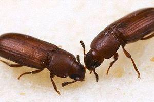 Τα έντομα δεν είναι ομοφυλόφιλα