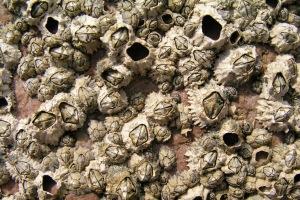 Πεταλίδες που τρώνε πλαστικά ανακάλυψαν οι επιστήμονες