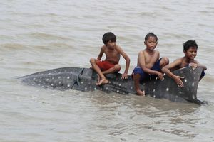 Στην πλάτη του (νεκρού) φαλαινοκαρχαρία