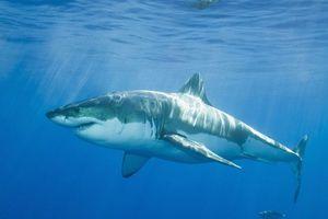 Καρχαρίας σκότωσε έναν 18χρονο σέρφερ