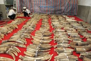 Κατασχέθηκαν 12 τόνοι ελεφαντόδοντο