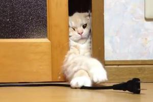 Απεγνωσμένη η προσπάθεια της γάτας