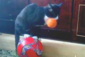 Γάτα για τσίρκο