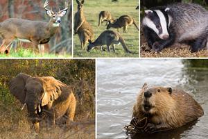 Ποια είδη καταστρέφουν τον πλανήτη