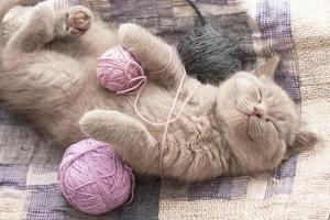 0fccd1495138 Τι σημαίνει όταν μια γάτα γουργουρίζει – Newsbeast