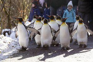 Βόλτα με τους... πιγκουίνους